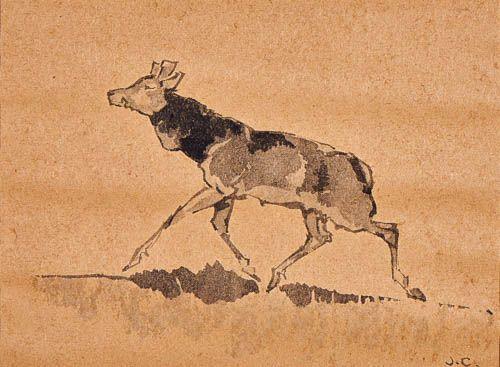 Spring Red Deer in Doñana Spain