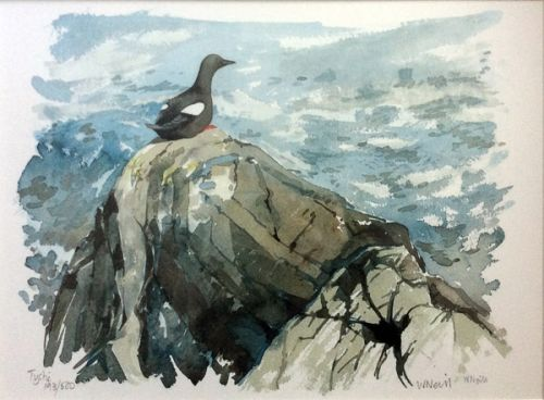 Guillemot by William Neill