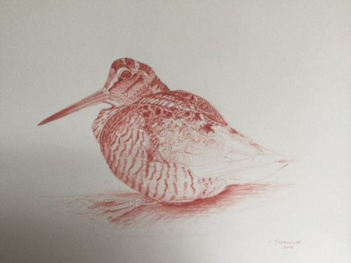 Woodcock in Venetian red by Ian Greensitt